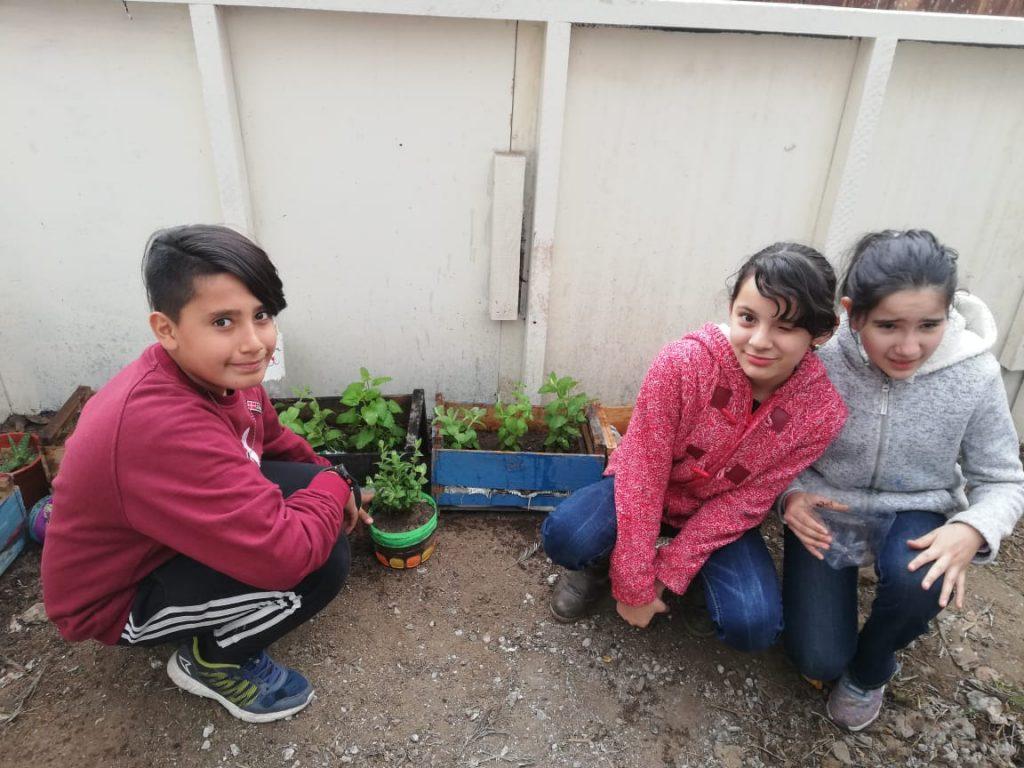 Creando almacigos en el huerto escolar 6º basico B.